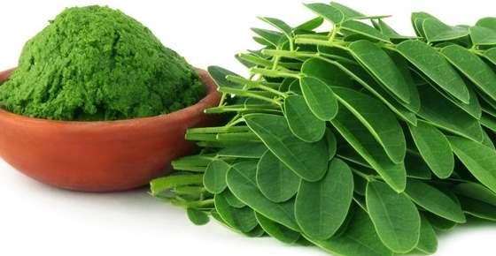 Benefits of organic Moringa seed,Tea, Powder, Leaves