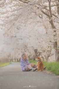 宠物治愈 柴犬 宠物生日 宠物礼品 宠物健康 ebzasia.com