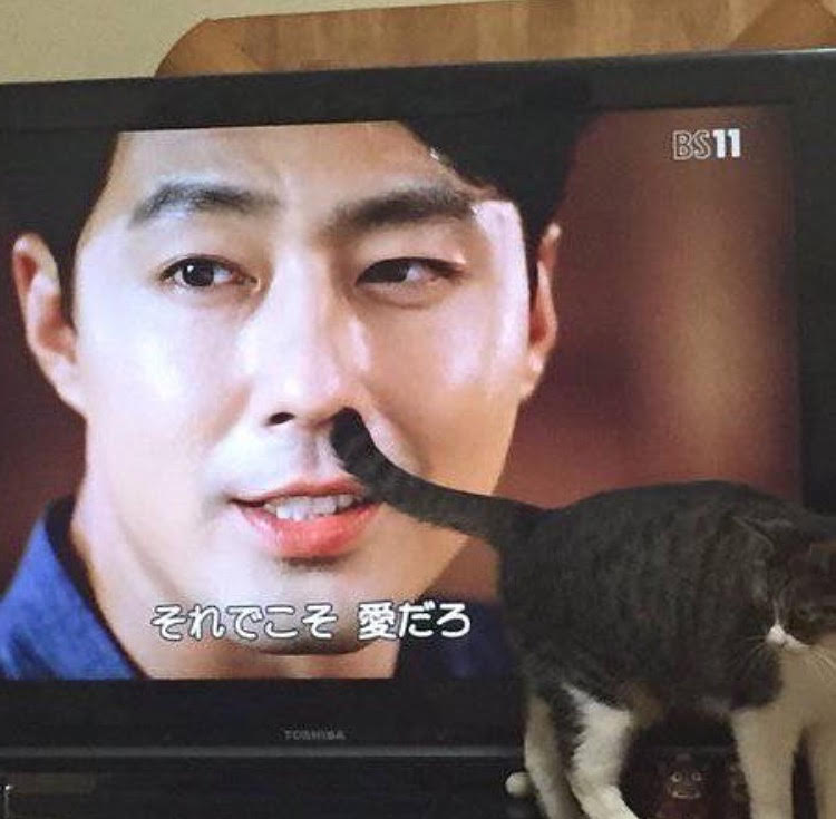 宠物搞笑 喵星人 猫奴 宠物 电视机 电视场景 ebzasia.com