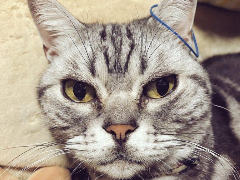 宠物搞笑 宠物 猫咪 橡皮筋 拆家 镜头 ebzasia.com